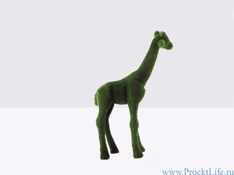 Топиари жираф маленький